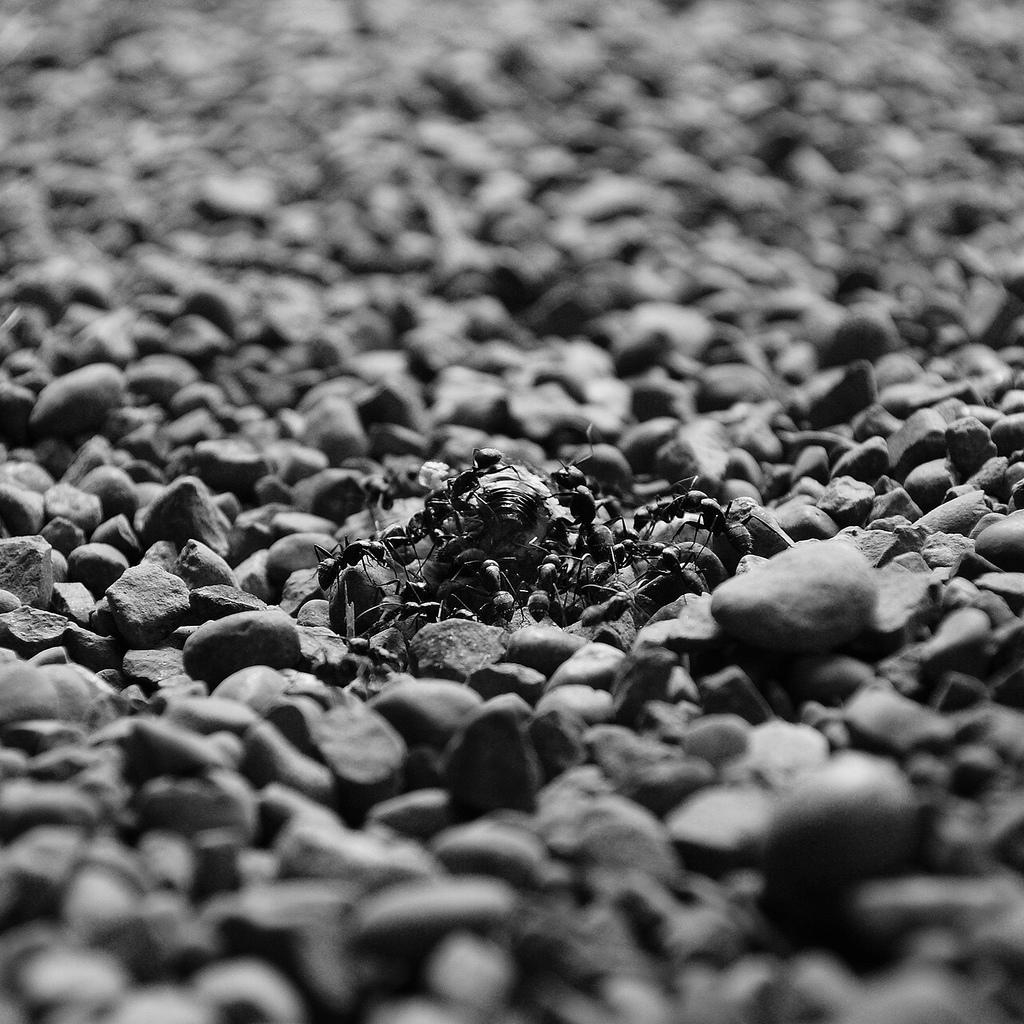 http://www.flickr.com/photos/kiyoshi_be/3105322570/