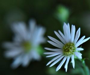 https://www.flickr.com/photos/rejik/5469631581