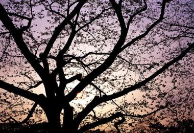 Screen-shot-2010-11-11-at-12.05.18-AM1