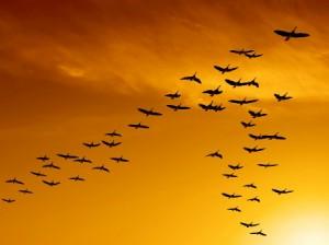 birds-300x2241