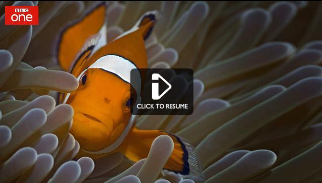 fish_bbc