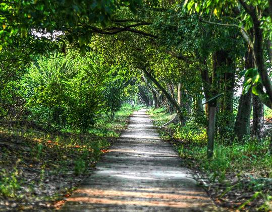 road-nature1